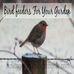 How To Make Bird feeders For Your Garden