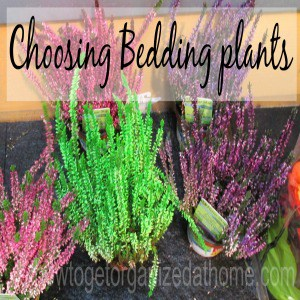 Choosing Bedding Plants