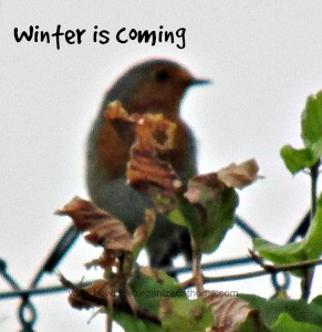 Tips For Your Winter Garden