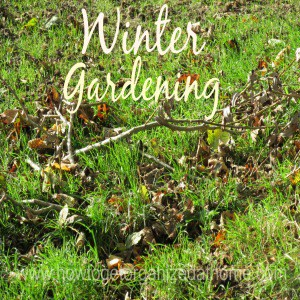 Winter Garden Preparation