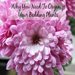 Why You Need To Organize Your Bedding Plants