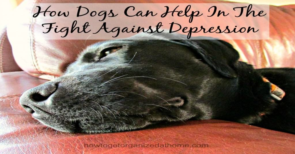Dogs can help in the fight against depression, they are truly man's best friend, by providing so much love and support just when you need it most!