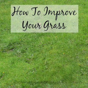 How To Improve Your Grass