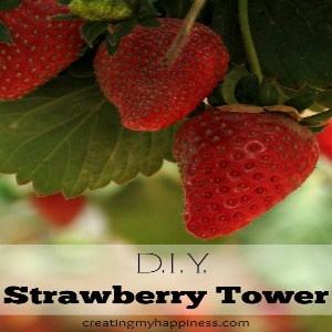 D.I.Y. Strawberry Tower