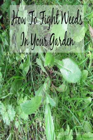 How To Fight Weeds In Your Garden