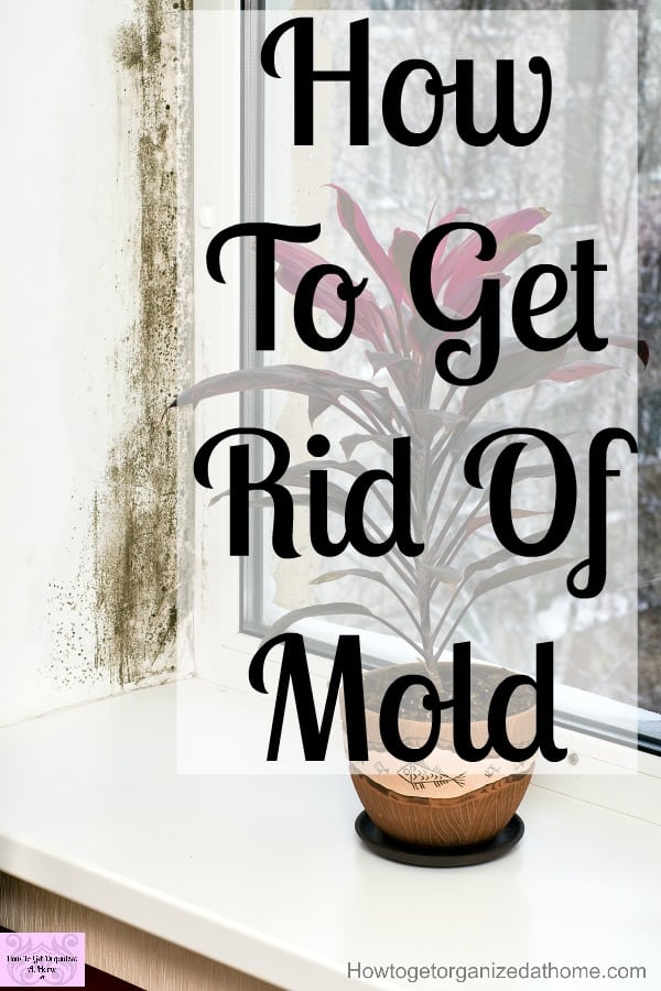 Do You Need To Get Rid Of Mold In Your Home Want