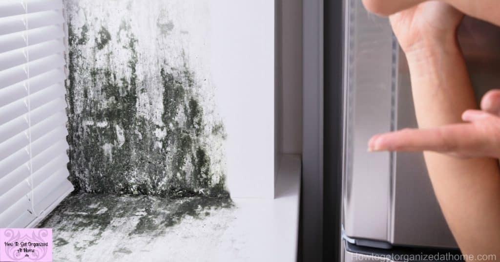 The Best Ways For Tackling Mold On Window Sills