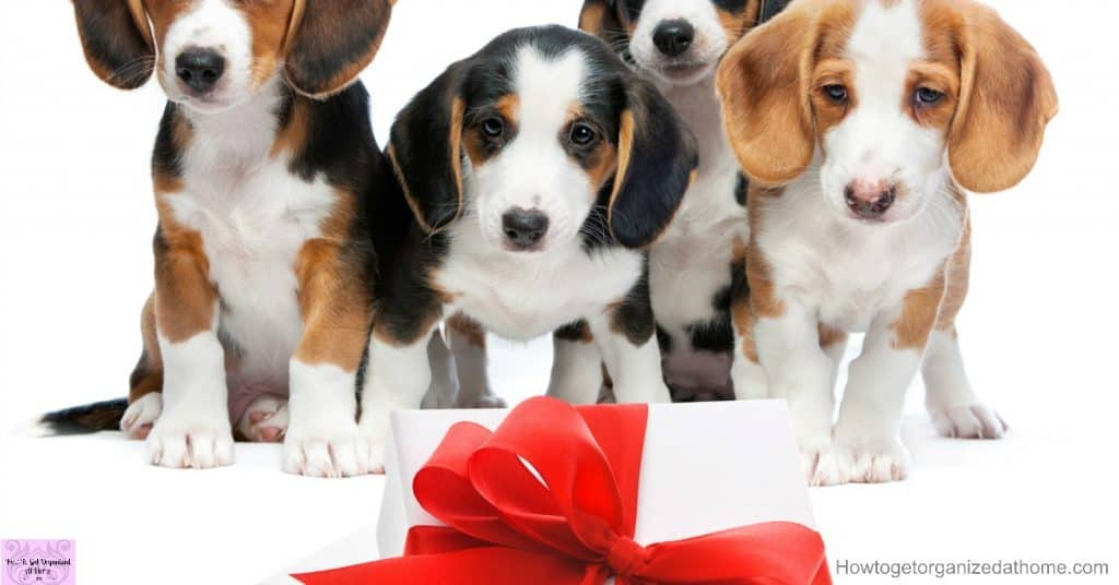 Looking for a gift idea for dogs? This list has you covered!