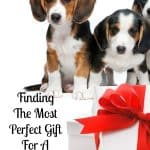 Don't worry I've got you covered if you are looking for a gift for a special dog in your life!