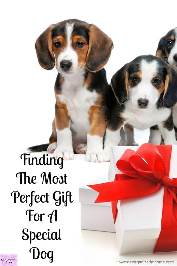 Looking for that perfect gift for dog lovers this holiday time? Then I've got you covered with this amazing list!