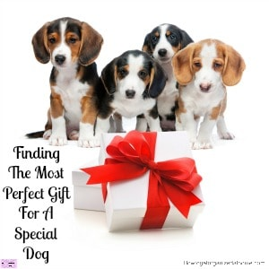 Finding The Most Perfect Gift For A Special Dog