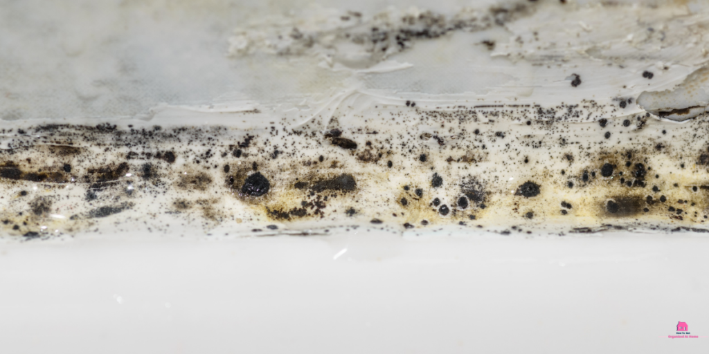 mold mould